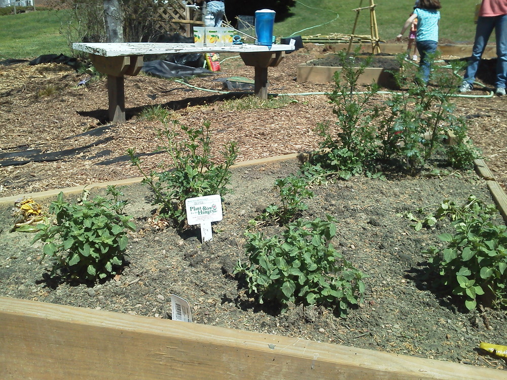 """The Kirk Community Garden helps reduce food security in their area by growing and donating food as part of the """"Plant a Row for the Hungry"""" initiative."""