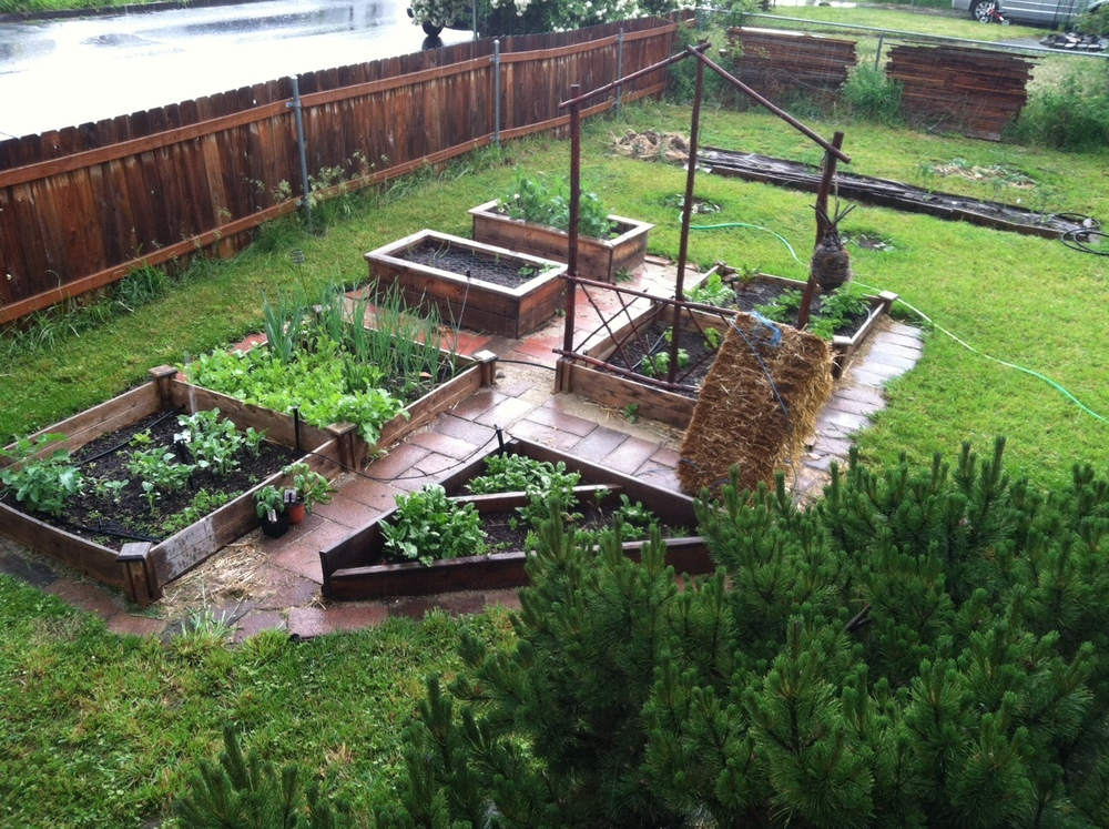 Vegetables growing in raised beds