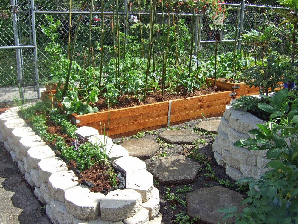 The raised beds in the garden early in the season.