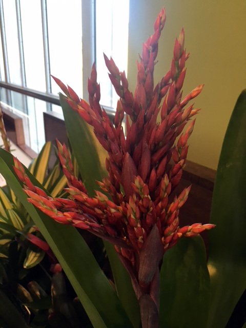 A colorful bromeliad