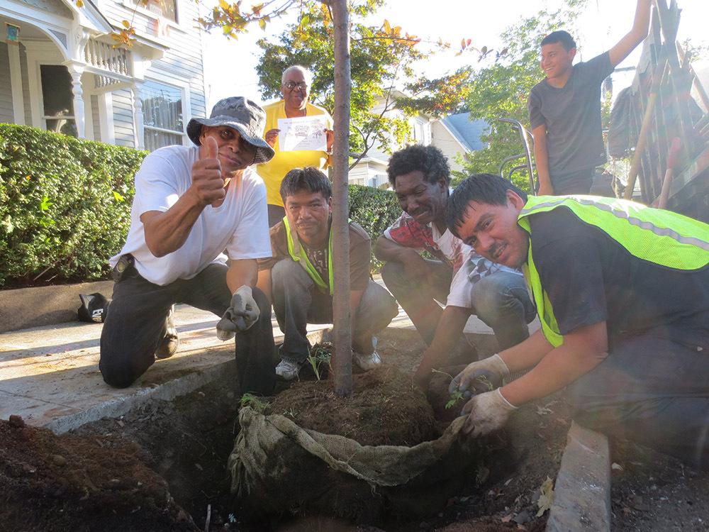 Preparing to plant a tree