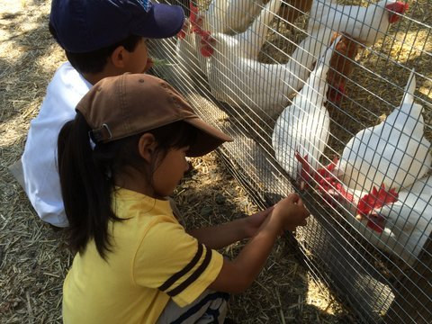 Young garden family members caring for our seventeen resident chickens.