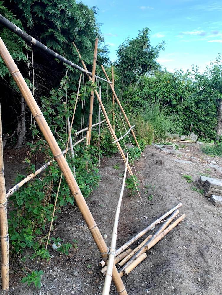 Bamboo trellises