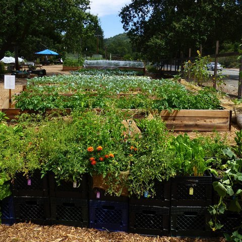 Flatbeds and milk crate garden beds (front) in the Lafayette Community Garden.