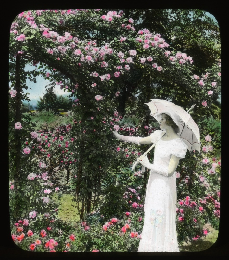 Woman with a parasol standing by an arbor of climbing 'Mary Wallace' roses, June 1933. Smithsonian Institution, Archives of American Gardens, J. Horace McFarland Collection.
