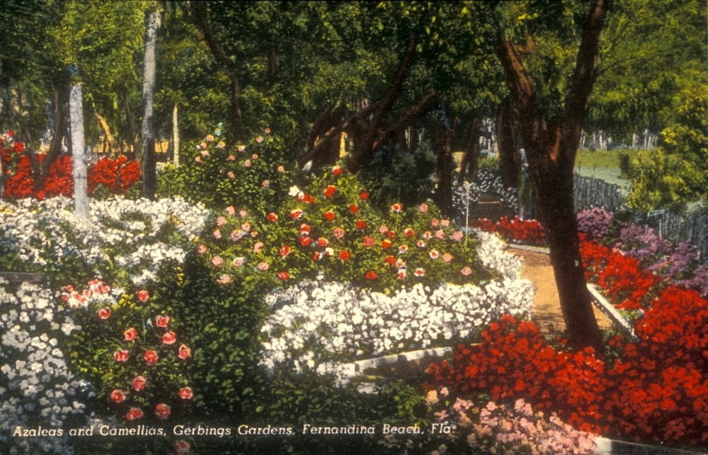 A colorized photo postcard shows the concrete edging, sawdust walkways and chain link fencing used in the Gerbing garden, circa 1945-1947. Smithsonian Institution, Archives of American Gardens, Garden Club of America Collection.
