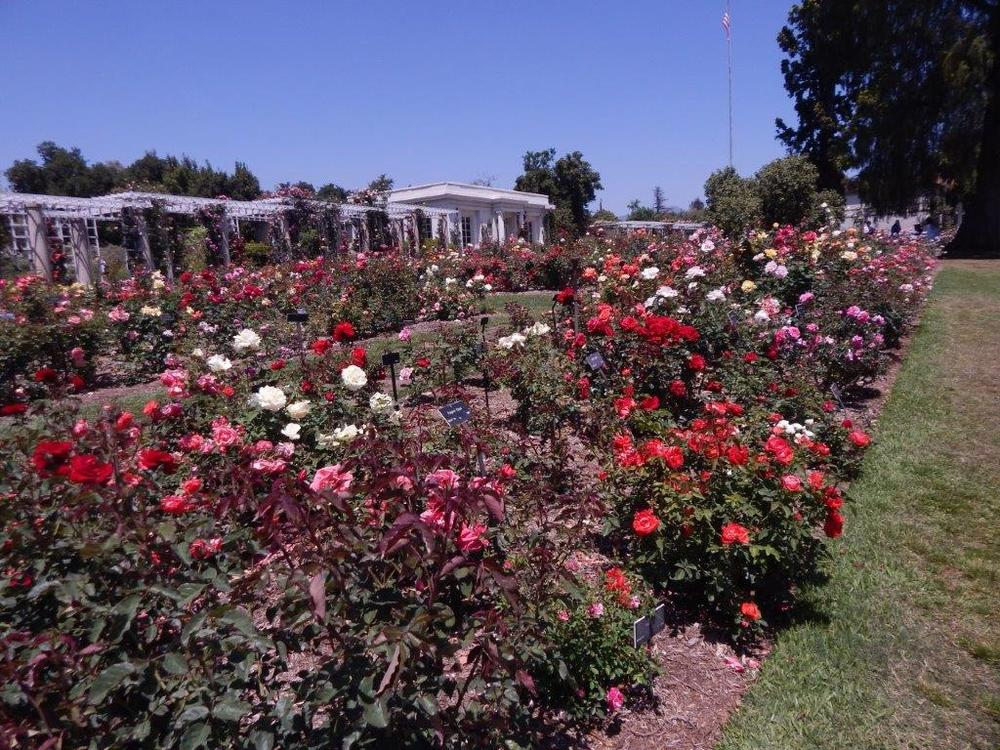 The Rose Garden at The Huntington