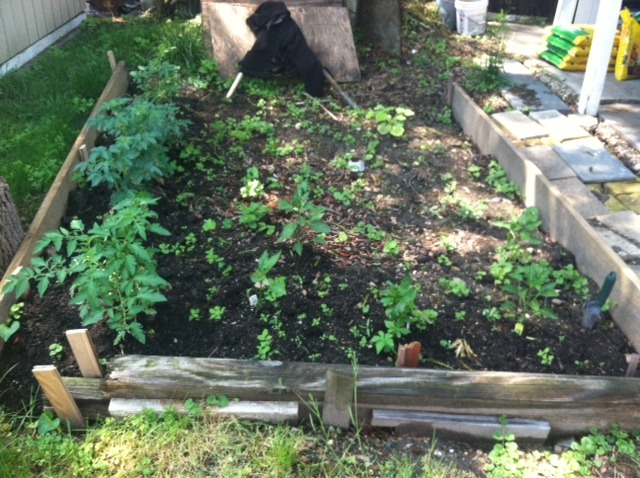 Heisi's garden plot at her home in Washington, D.C., May 2014.