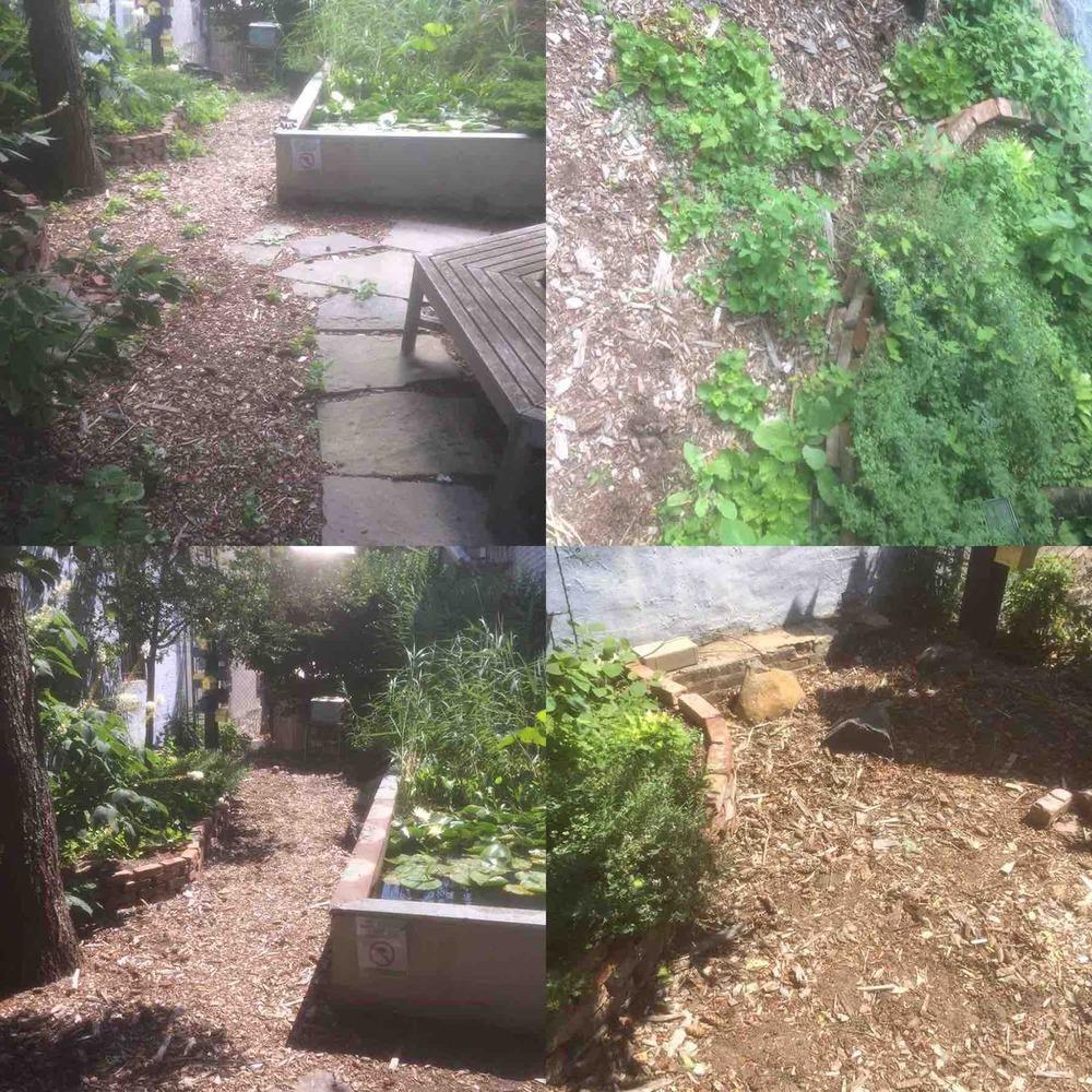 Community garden in New York City