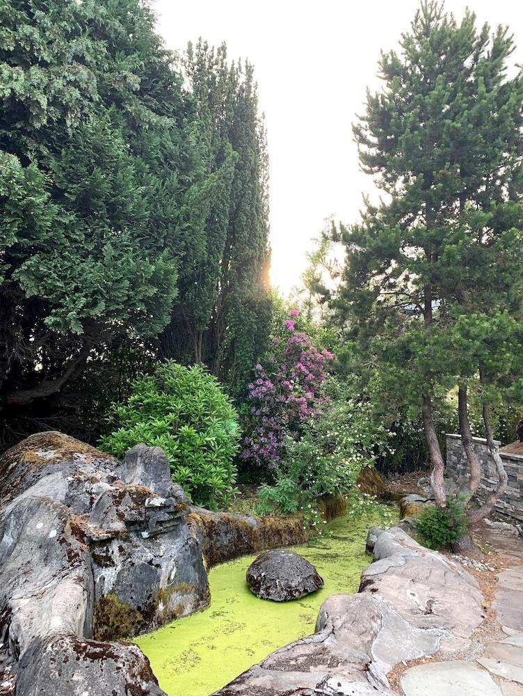 A rocky garden