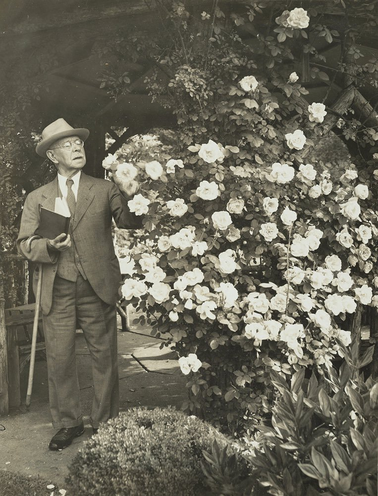 J. Horace McFarland looking over Mary Wallace roses in his garden, 1943. Smithsonian Institution, Archives of American Gardens, J. Horace McFarland Collection.