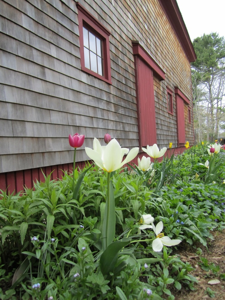 A spring shot of the bed beside the Climbing Barn.