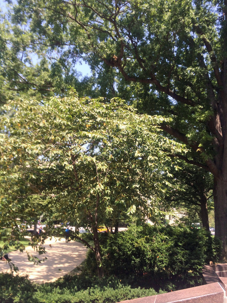 Trees provide shade and a peaceful atmosphere to enjoy this public space at the Robert A. Taft Memorial.