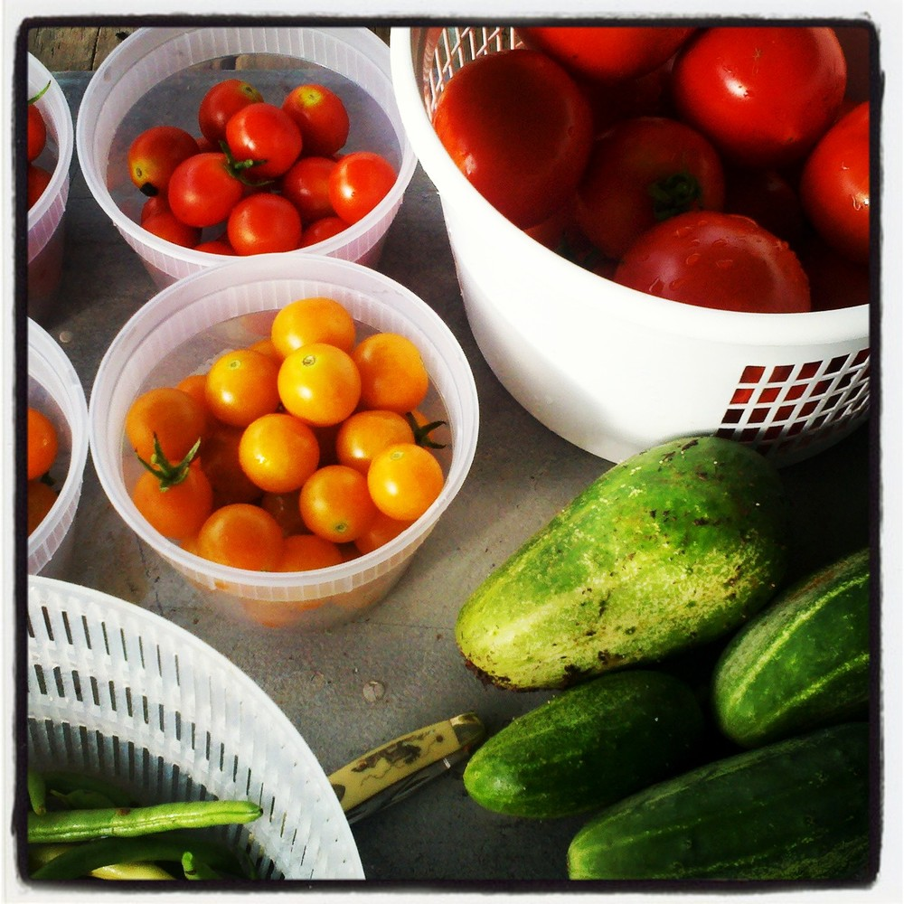 Cucumbers, tomatoes, and green beans harvested from the Well Fed Community Garden. The produce is sold to  the Irregardless Café and donated to volunteers and those in the community.