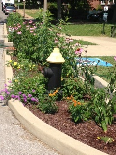 Butterfly garden in bloom