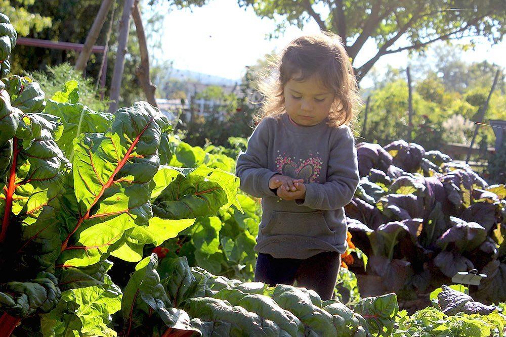 ithaca_childrens_garden9.jpg