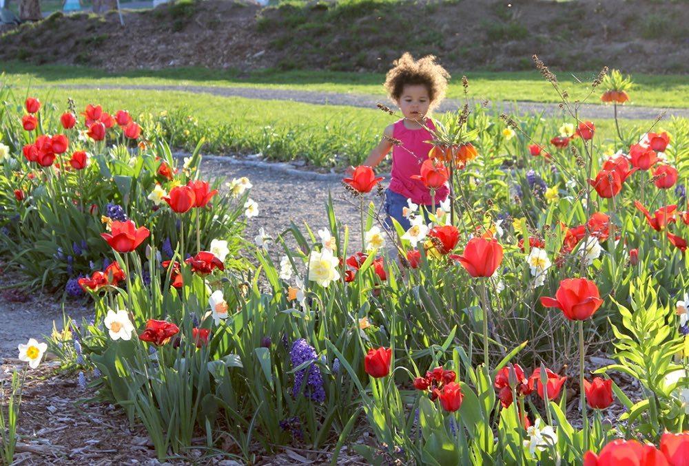 ithaca_childrens_garden1.jpg