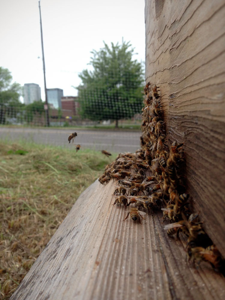 Honey bees at Jones Valley Teaching Farm.