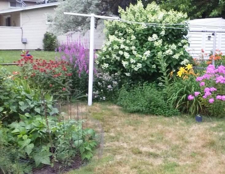 Shirley's garden