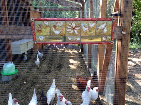 A tile mural featuring chickens greets visitors to the chicken coop and yard at the Lafayette Community Garden.