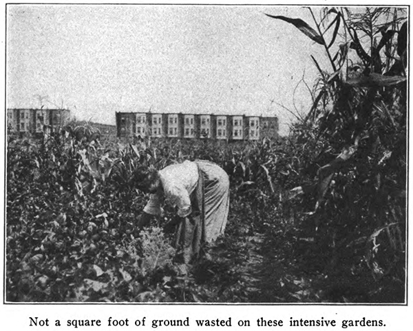 Woman in Philadelphia Garden 1917 report.jpg