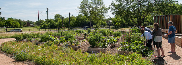 Visitors admire the individual plots of the North Austin Community Garden on their Grand Opening day. © Philip Rogers, 2014.