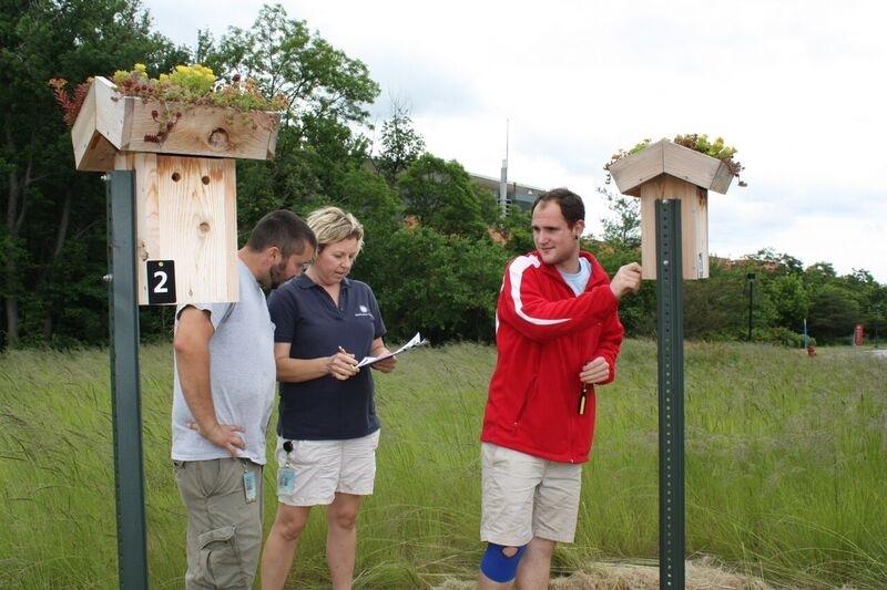 Monitoring bluebird boxes