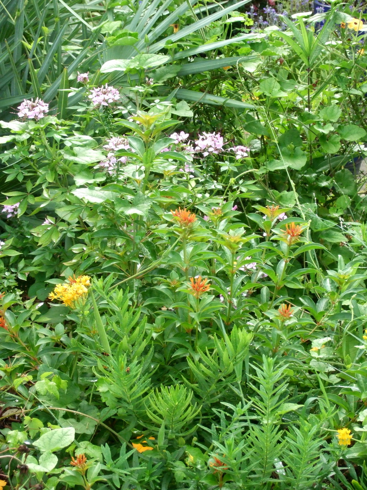 A rainbow of flowers in the front yard of the garden.
