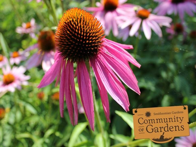 Community of Gardens outreach image