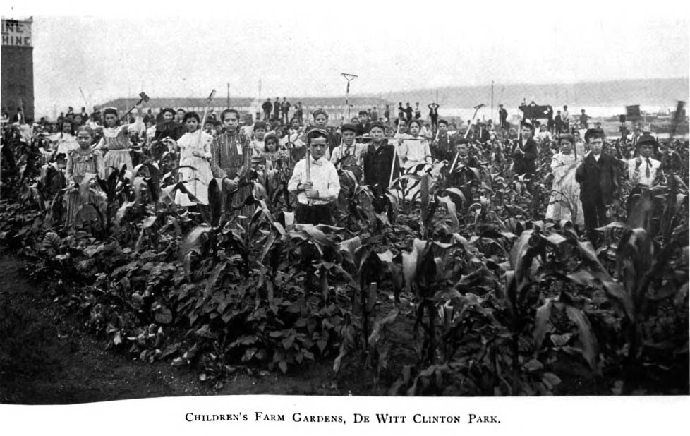 Children posing for the camera at DeWitt Clinton Park in a vegetable plot, 1902. Annual Report, New York City Department of Parks, 1902.