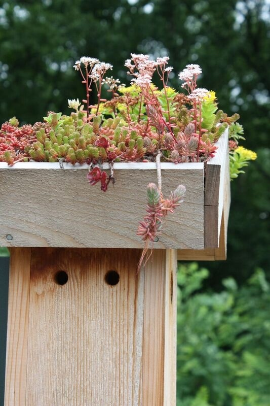 Green roof on a bluebird box