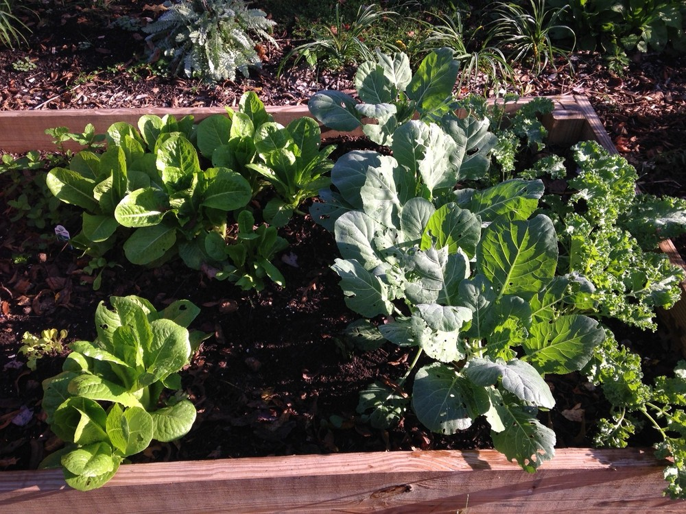 Residents can rent plots to grow food, and some plots are reserved for community education.
