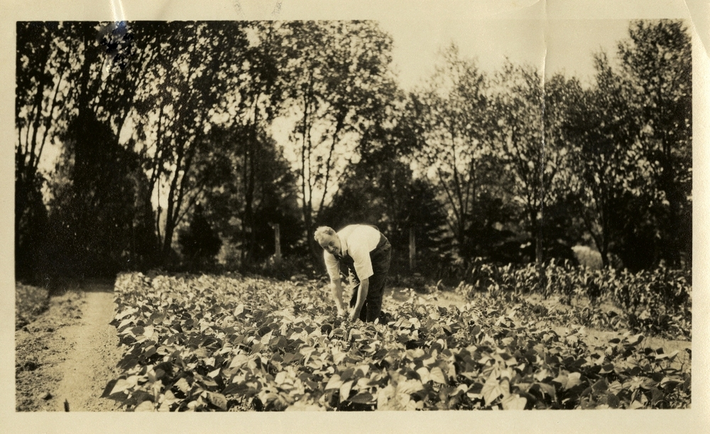 Clyde Williamson in his city garden in New London, CT, circa 1924