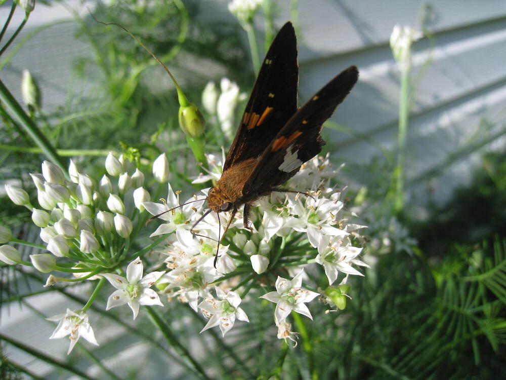walk_pollinator1.jpg