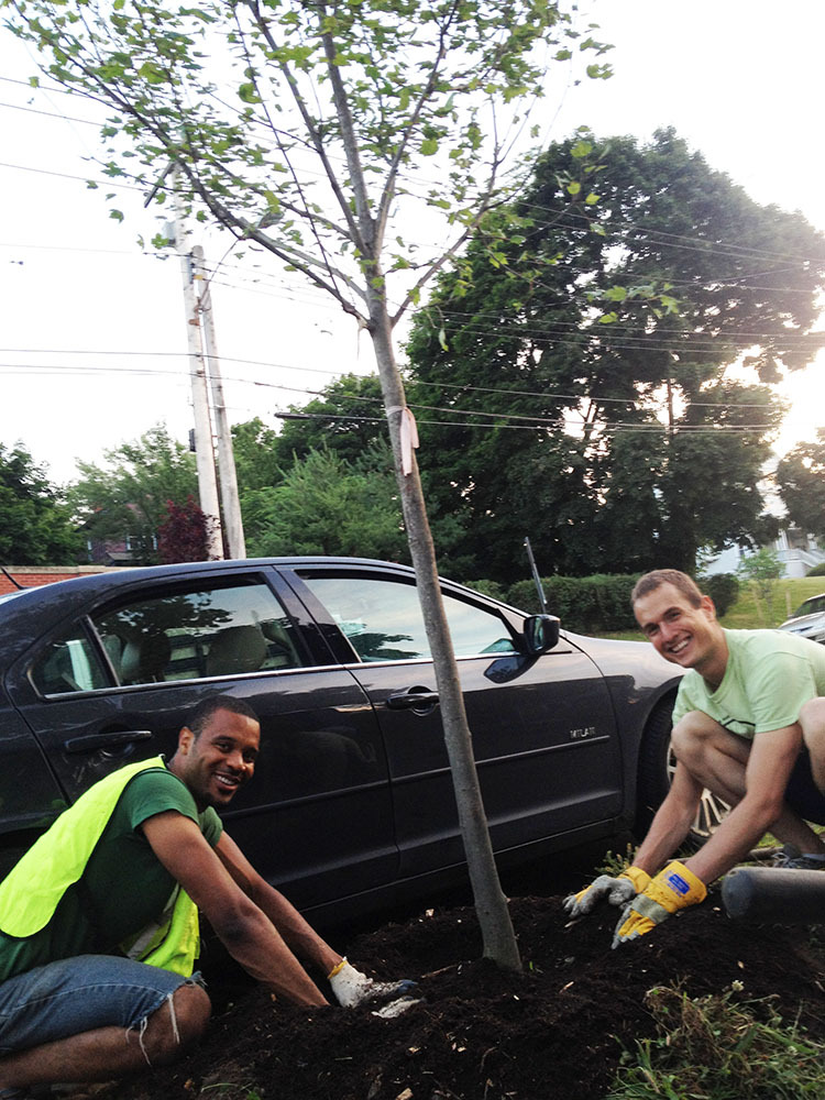 Volunteers planting a street tree