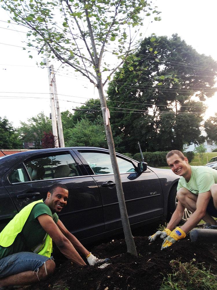 Volunteers planting a street tree