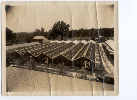 An aerial view of Rosa Villa nursery