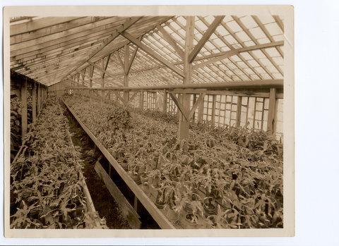 Christmas cactus in Rose Villa greenhouse