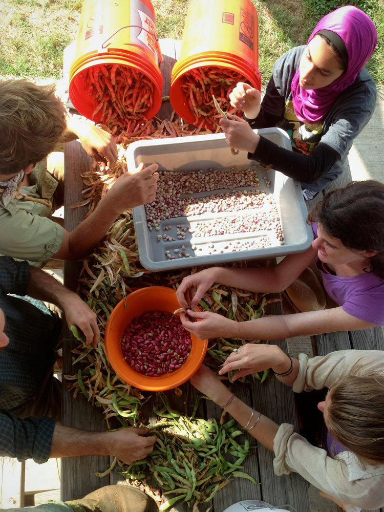 Shelling the bean harvest at Jones Valley Teaching Farm.