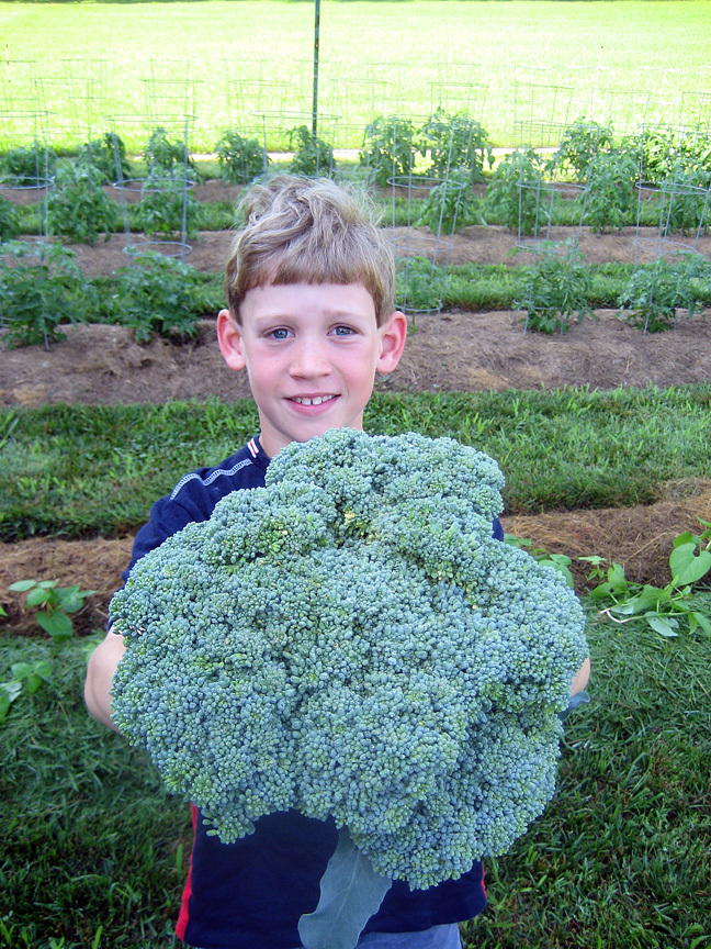 My son harvesting broccoli in the garden, 2011.