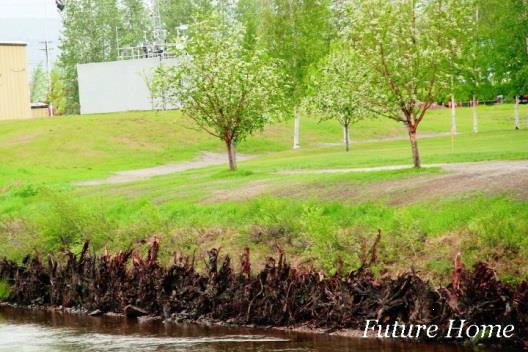 The Pier Bugnet's future home, on the opposite bank of the Chena River. The rose will be used to help with erosion control on the second side of the bank, once the river walkway is completed.
