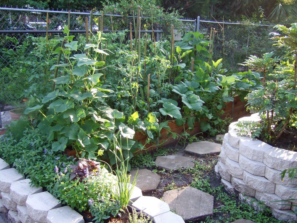 Just two weeks later, the raised beds in the garden are bursting with green.