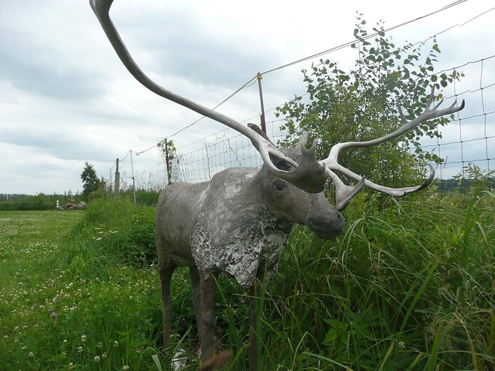 A sculpture of a moose