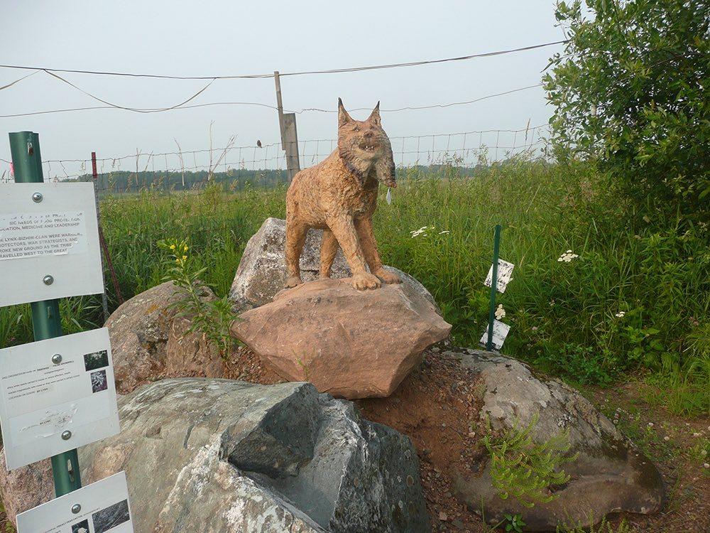 A wolf surveys the garden