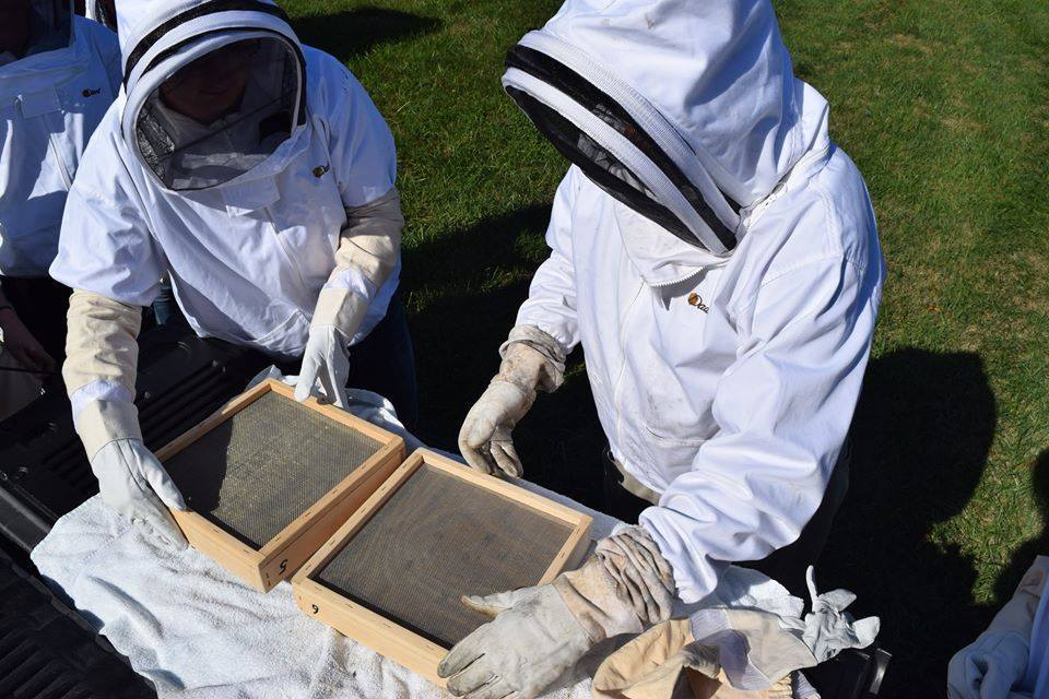 Beekeeping at the Parkside High School apiaries