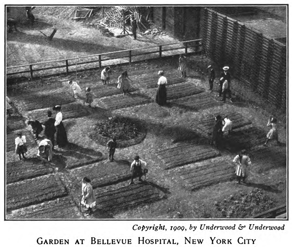 NYC School Garden from Among School Gardens1911.jpg