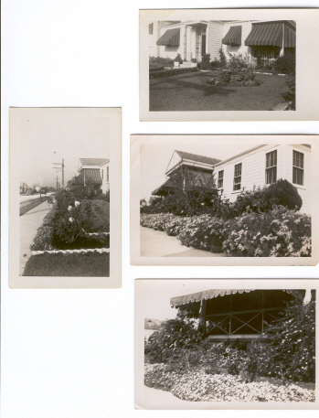 Beatrice's garden in bloom