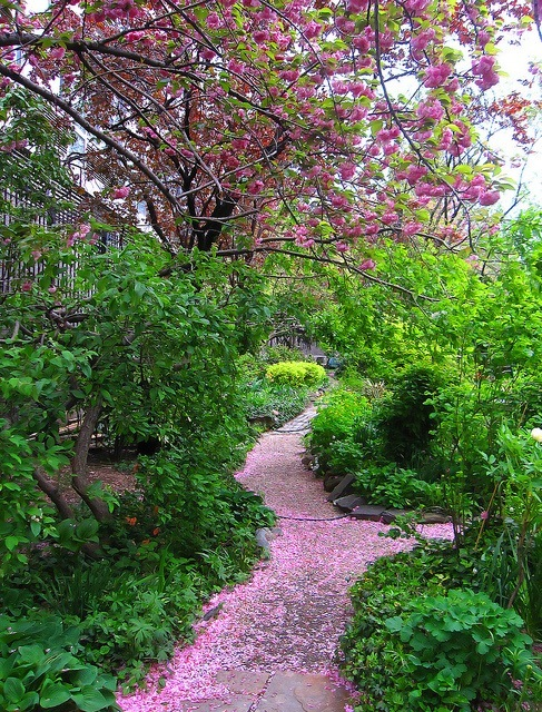 A winding garden path