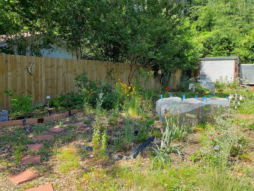 Backyard pollinator garden