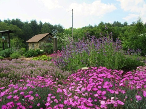 Georgia Mountain Ethnobotanic Gardens